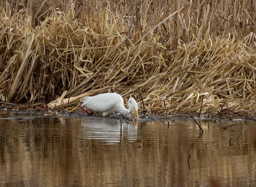 Fiske   Hs   2012 apr 27_4456