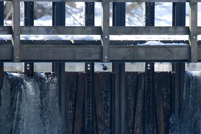 Stromstaren pa bron  Hs  2013 04 03_5134