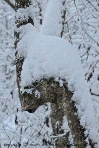 enhorningen-i-vinterskrud-dsc_47031