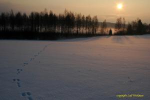 milsbosjon-vinter.jpg