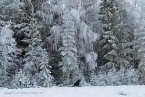 vinter-fm-nygardstakt_redigerad-2