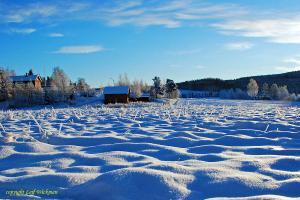 vinter-igen-2008-jan-31.jpg