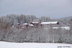 vinterbild-smass-nov-26-2007.jpg