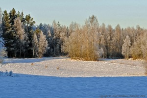vintermotiv-3-radjur