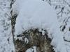 enhorningen-i-vinterskrud-dsc_4703.jpg